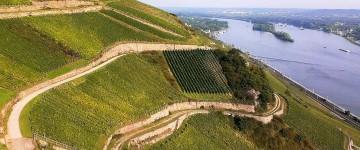 Weinberge von Rüdesheim