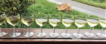 Weinprobe während der Terroirführung