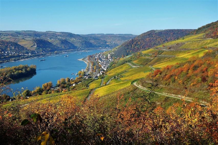 Wandern im Rheingau: Weinwanderung in den Weinbergen von Lorch.