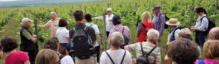 Weinlagenwanderung in Erbach